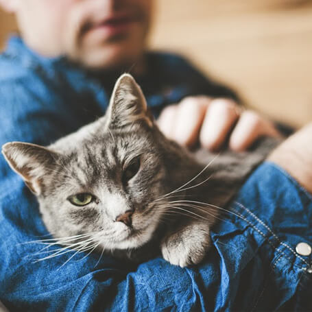 Preventative Care for Cats